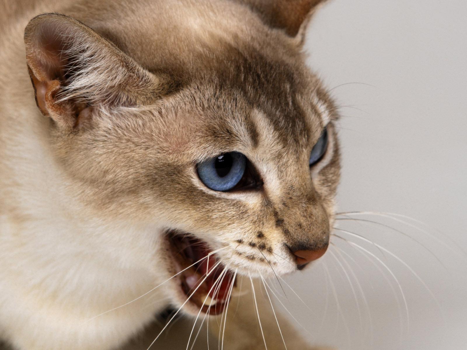 Бешенство у кошек: симптомы, признаки, профилактика